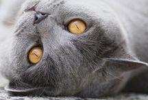 Kattenliefde