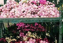 virágözön - flowers
