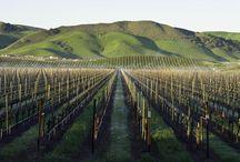 Gorgeous Vineyards Around the World / Inspiring Vineyards Around the World