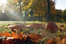 Belleza Autumn Inspiration