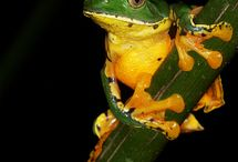 Frog photo+art