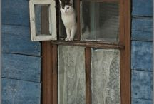 Cat's from the outside in