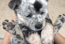 Puppy / I want