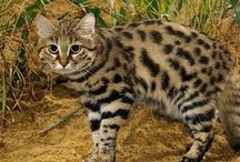 Stunning Cats