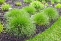 Gardening - to plant - Grasses