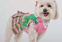 roupas para cachorros
