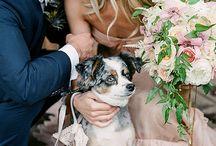 Wedding Cats and Dogs (Düğün kediler ve köpekler)