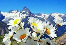 flower / https://www.facebook.com/Flowers-Love-778584065525595/