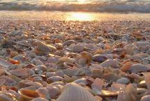 Conchitas playa