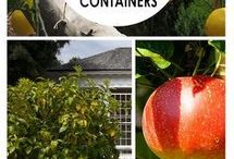 Grow in containers