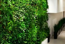 Plantscreen / Green Walls produced and sold by us