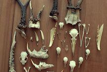 skeleton luut