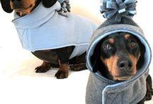 Puppy stuff  / by Veronique Tremblay