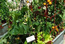Ogrody do zjedzenia