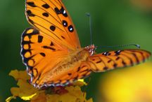 Butterflies & Moths / by Margie Ree