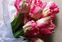 ~ Flowers ~