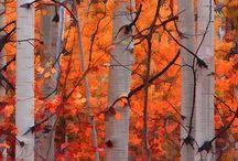 ..trees..