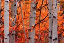 Trees / by Sarah Payton