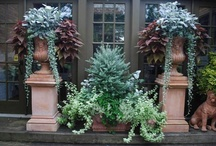 Outdoor planters cold weather