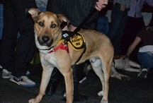 Events / by City Dogs Rescue DC