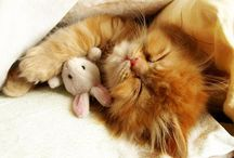 adorable / by Lisa Buchinski