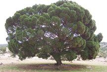ağaçfoto