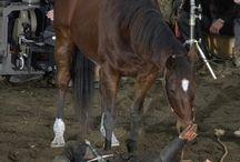Horse Bonding