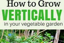 Great Gardening Tips from Organic Gardeners