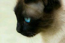 cats/kočky