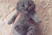Gatos / Animales
