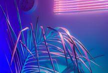 Фиолетовый рай, фиалки свечение