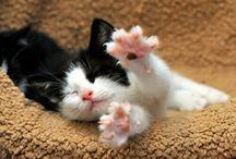 @one_baad_cat / Tweetet account. @one_baad_cat