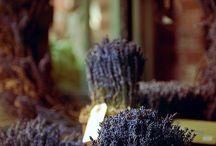 Красавица  лаванда