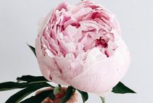 Peonies :-D / Celebrate these bountiful blooms