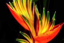 Краса квітів