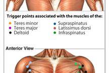 Myofacia Pain Syndrome