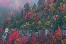 Fall Favorites / I love autumn!