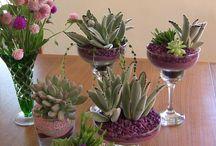 Vasos e Flores... primavera