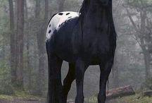 Horses / Αλογα