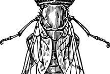 Lizzy Bug Board / Bug drawings