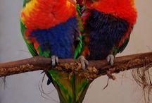 Birds species I've raised...