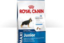 Ξηρές τροφές για σκύλους / Οι καλύτερες ξηρές τροφές για σκύλους στις καλύτερες τιμές! Προσφορές και εκπτώσεις στο Animal.gr