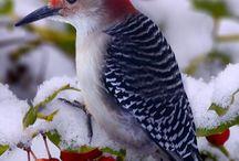 Birds and / by Gary Codyre