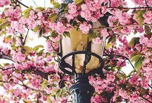 Spring and Summer in Paris