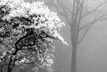 colour {black + white}