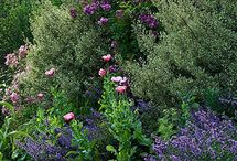 beautiful flowers / Beautiful flowers and gardens from around the world