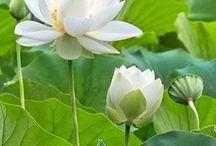 Virágok- Flowers