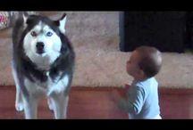 kutya videók képek