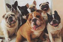 Animais / #animals #puppy #frenchbulldog #englishbulldog #labrador #deer #cute #puppies #cachorros #filhotes #labrador #bassethound #dalmata