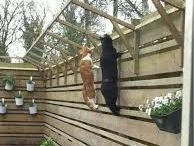 Cats -> Enclosure, Catio